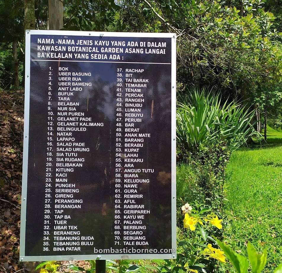 Asang Langai homestay, accommodation, Taman Botani, adventure, nature, outdoor, Herbal Plant, exploration, Lun Bawang, Ecotourism, Travel Guide, Borneo, 婆罗洲高原民宿, 马来西亚砂拉越, 巴卡拉兰植物园,