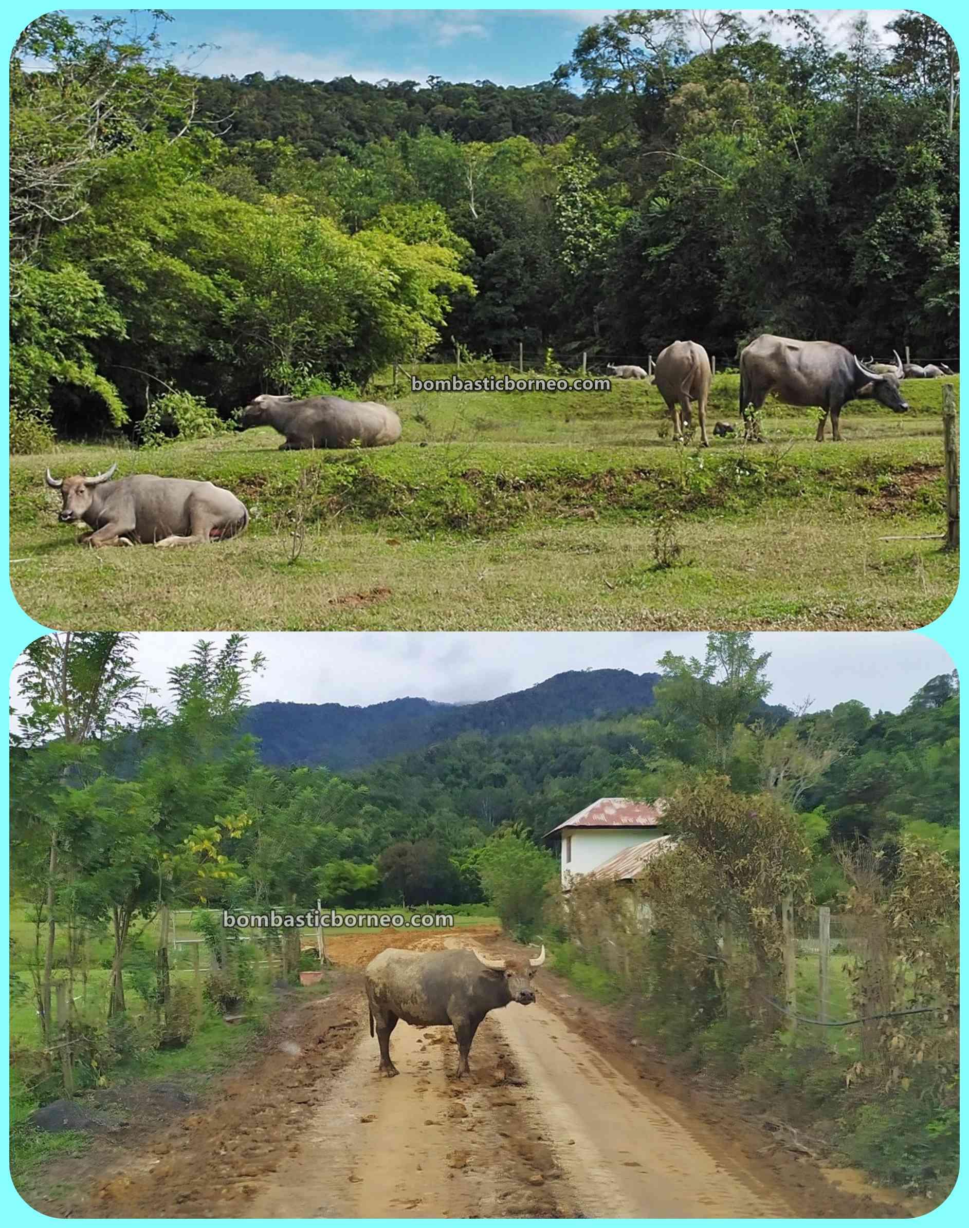 adventure, authentic, traditional, backpackers, destination, Interior, Village, native, Tourism, tourist attraction, Borneo, 穿越婆罗洲游踪, 砂拉越巴卡拉兰, 马来西亚内陆高原