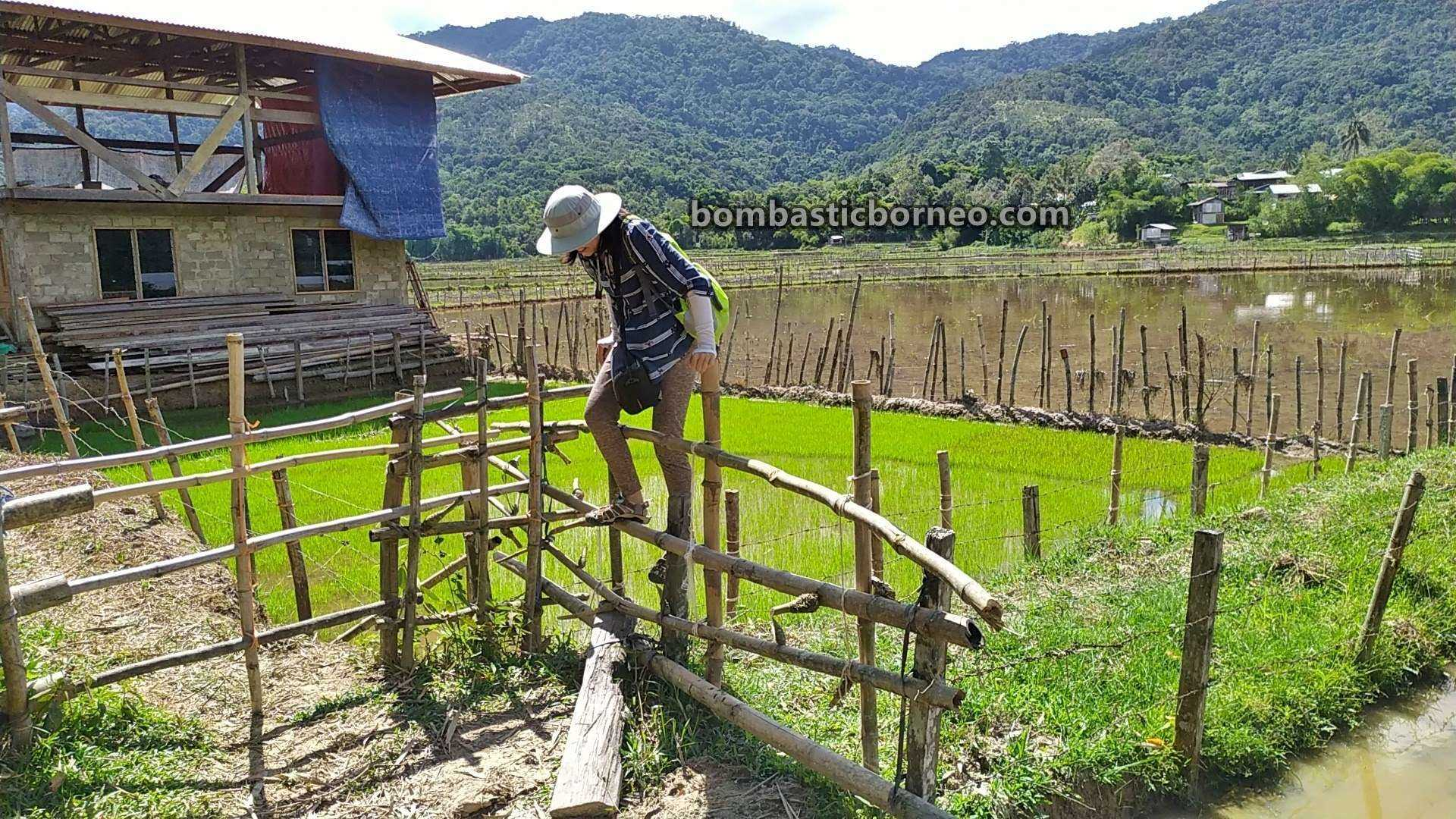 traditional, exploration, village, Maligan Highlands, Long Langai, Lun Bawang, Orang Asal, native, Travel Guide, Cross Border, Borneo, 婆罗洲砂拉越, 巴卡拉兰稻田, 探索马来西亚高原