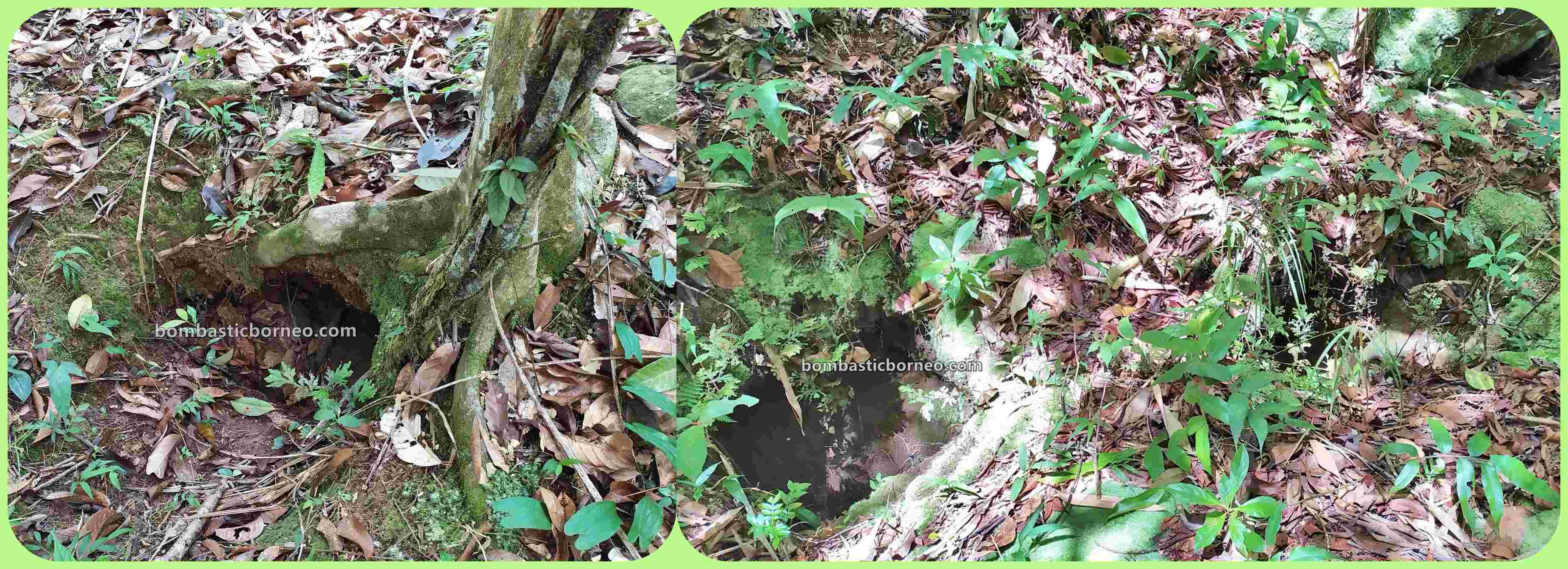 Malaysia, Botanical Garden, Asang Langai homestay, Taman Botani, outdoor, backpackers, destination, exploration, Maligan Highlands, Lun Bawang, tourist attraction, Borneo, 探索婆罗洲砂拉越, 马来西亚巴卡拉兰,