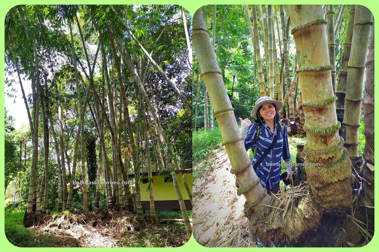 Asang Langai homestay, Botanical Garden, adventure, nature, outdoor, exploration, bamboo farms, Herbal Plant, backpackers, highlands, destination, Ecotourism, 探索婆罗洲砂拉越, 巴卡拉兰植物园