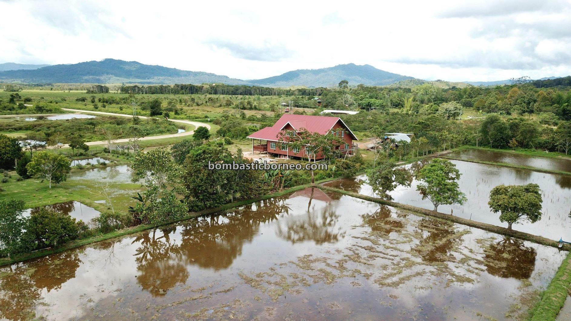 Bario, Kelabit Highlands, traditional, authentic, backpackers, exploration, Interior village, native, dayak, Malaysia, Sarawak, Tourism, travel guide, Trans Border, Borneo,