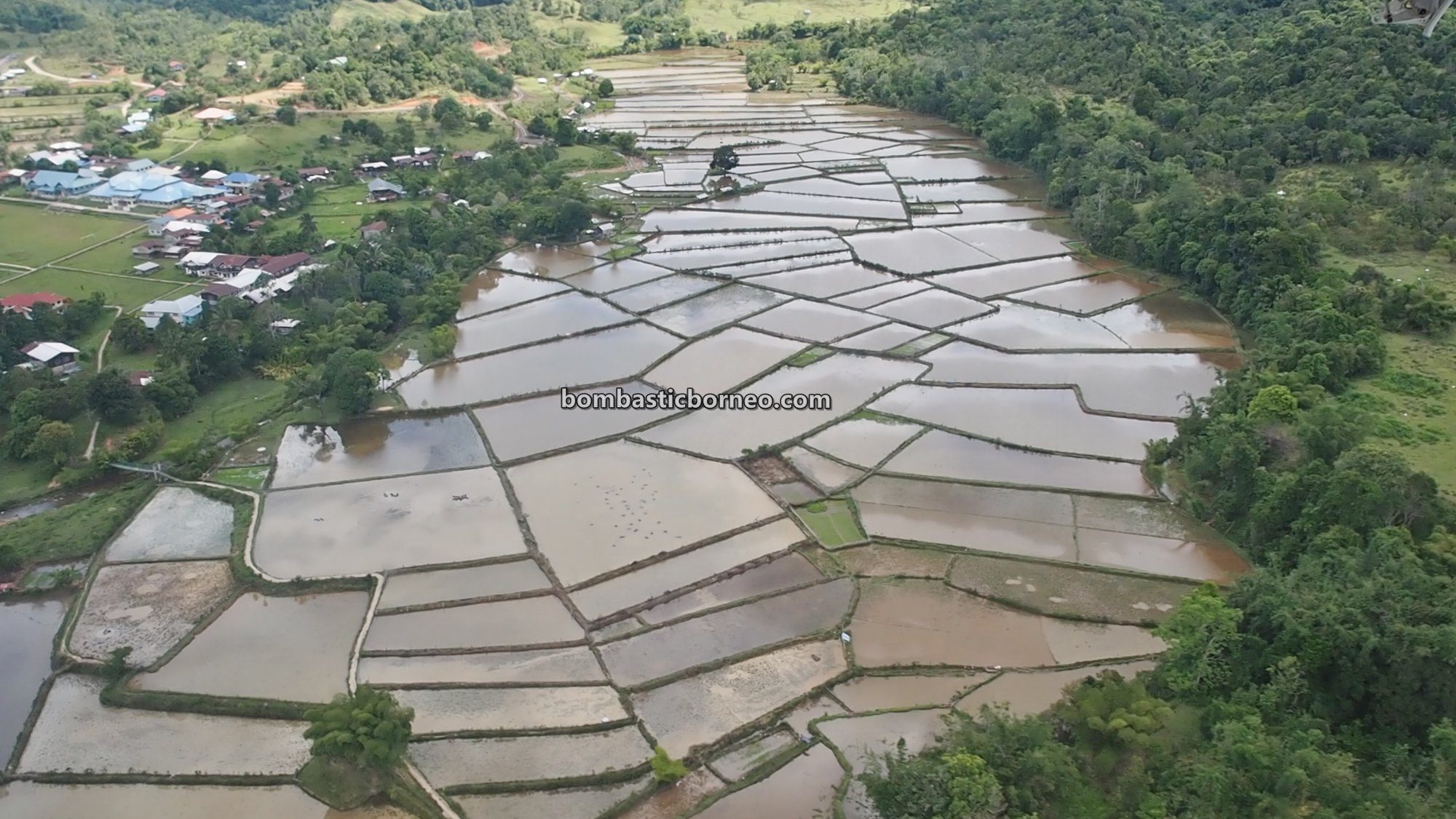 paddy fields, Bakelalan Highlands, adventure, authentic, traditional, backpackers, destination, exploration, Interior village, native, Malaysia, Sarawak, tourist attraction, travel guide, Borneo,