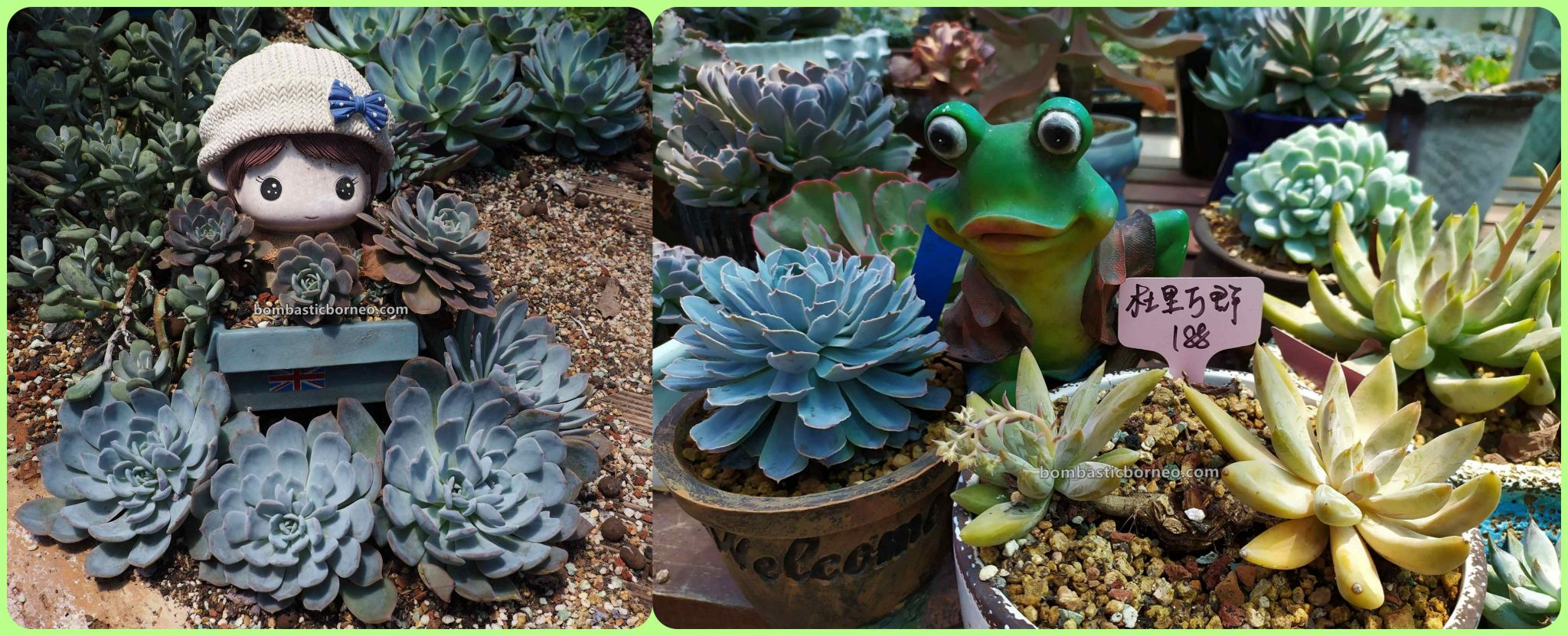 LS Succulent Garden, Succulents, cactus, Desert Plants, Tanaman Kaktus, backpackers, Sarawak, flora, nature, Discover Miri City, hobby, Malaysia, Tourism, Travel Guide, Borneo