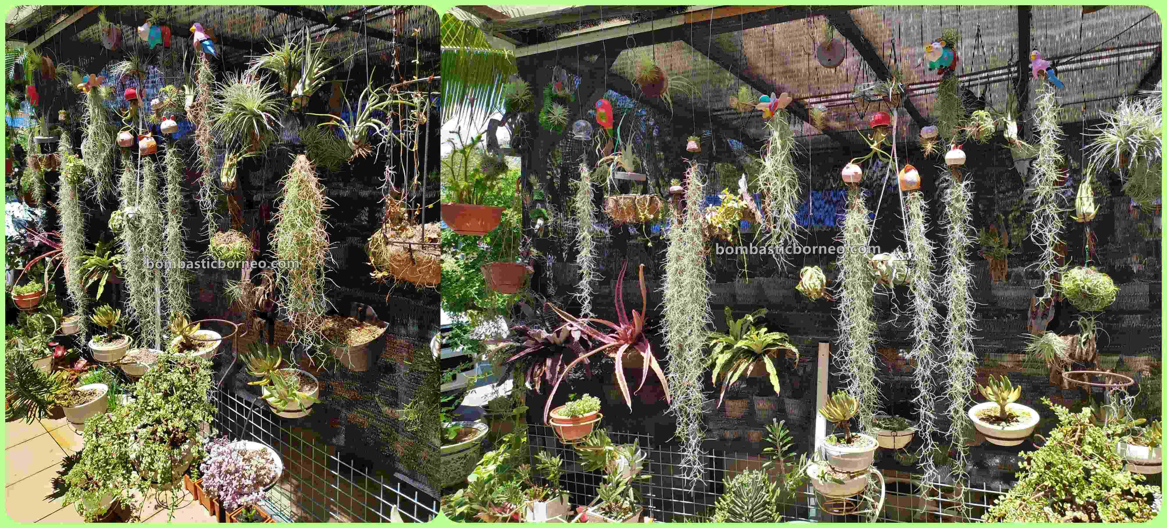 LS Succulent Garden, Succulents, cacti, Desert Plants, botany, flora, nature, exploration, hobby, Tourism, tourist attraction, Trans Borneo, 探索婆罗洲马来西亚, 砂拉越美里嗜好, 肉肉仙人掌植物