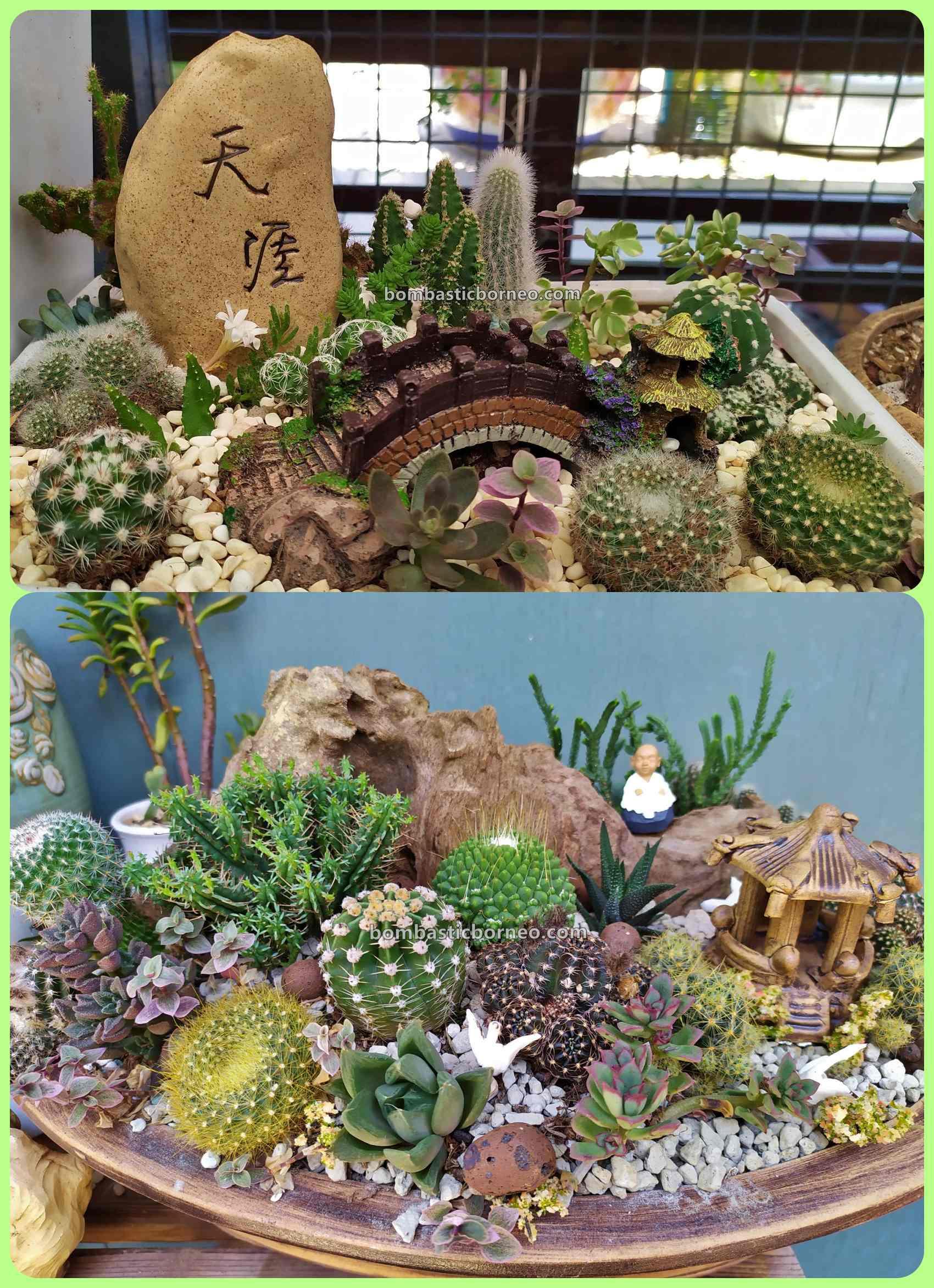 LS Succulent Garden, cacti, Desert Plants, Tanaman Kaktus, botany, nature, exploration, hobby, Malaysia, Tourism, tourist attraction, Trans Borneo, 探索婆罗洲砂拉越, 马来西亚美里, 肉肉仙人掌植物