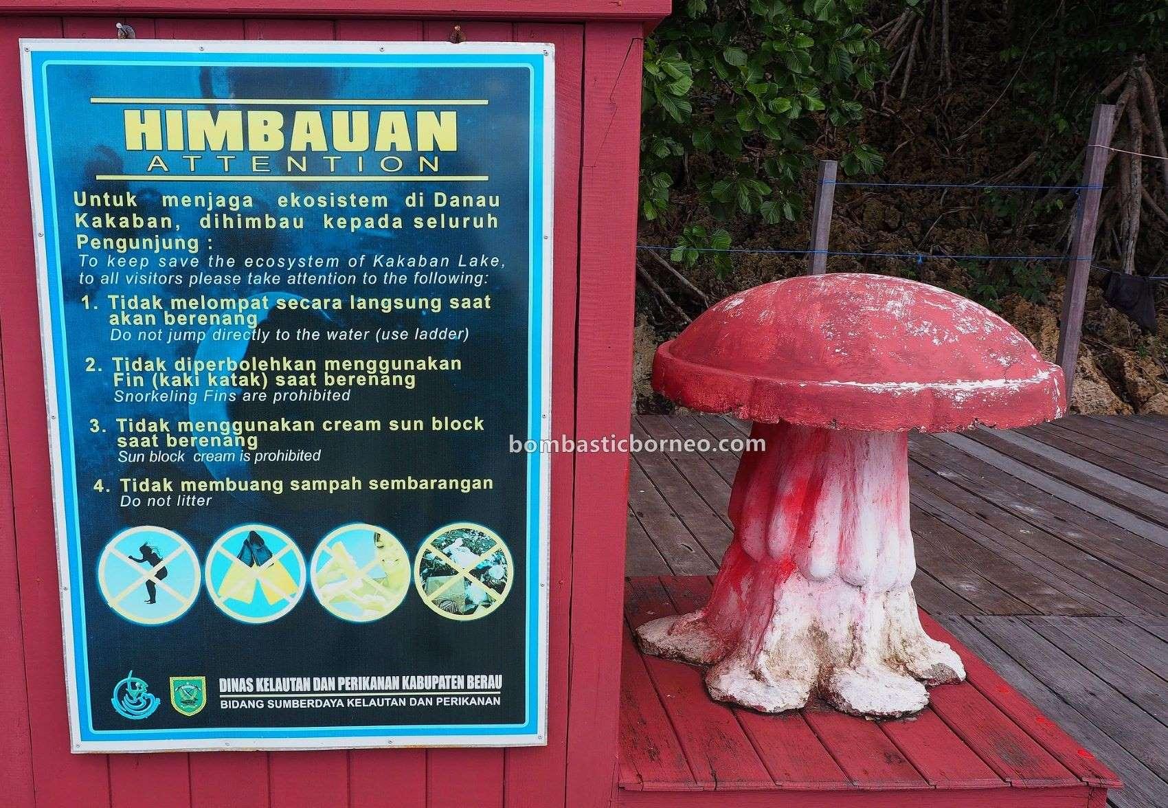 Kepulauan Derawan, Kakaban Island, Stingless Jellyfish Lake, nature, destination, exploration, mangrove forest, Berau, Kalimantan Timur, Pariwisata, Tourism, travel guide, Trans Borneo, 印尼东加里曼丹, 卡卡班岛水母天堂,