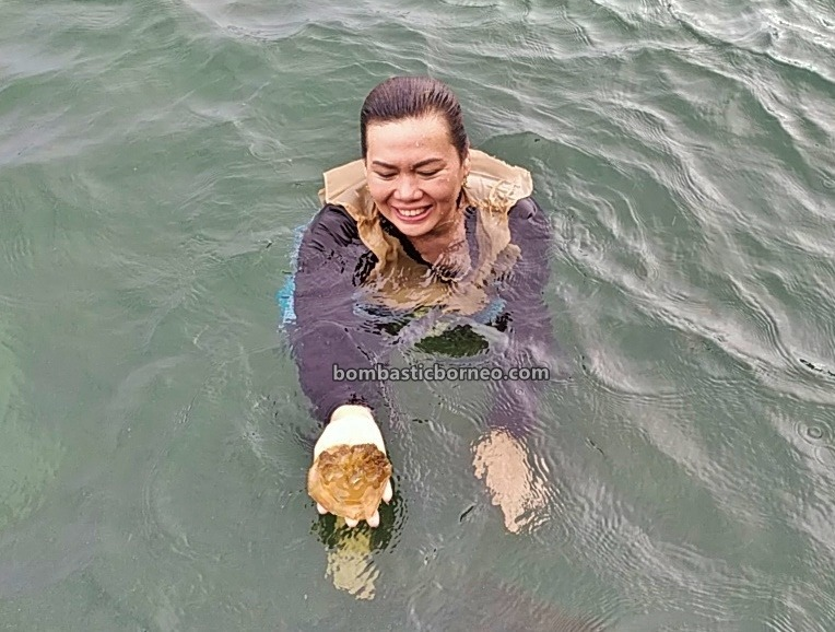 Derawan Archipelago, Stingless Jellyfish Lake, nature, outdoor, backpackers, destination, Snorkelling, exploration, Vacation, Kalimantan Timur, Objek wisata, Tourism, 探索婆罗洲游踪, 东加里曼丹卡卡班岛, 印尼水母潜水天堂,