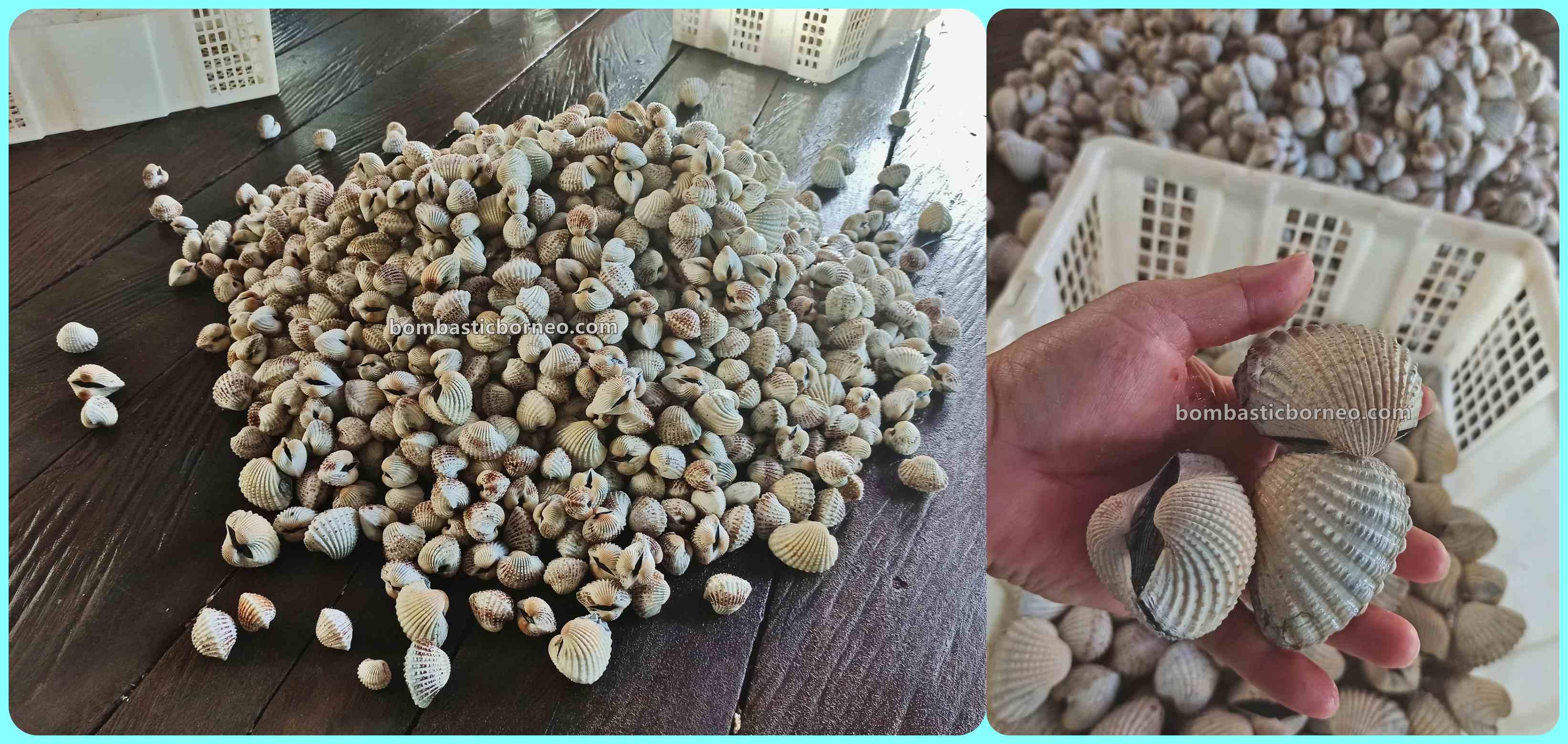 Kepiting Soka, Soft Shell Crab Farm, destination, Exotic Delicacy, exploration, Kaltara, Pariwisata, Tourism, Cross Border, Borneo, 印尼北加里曼丹, 打拉根岛鸟蛤养殖场