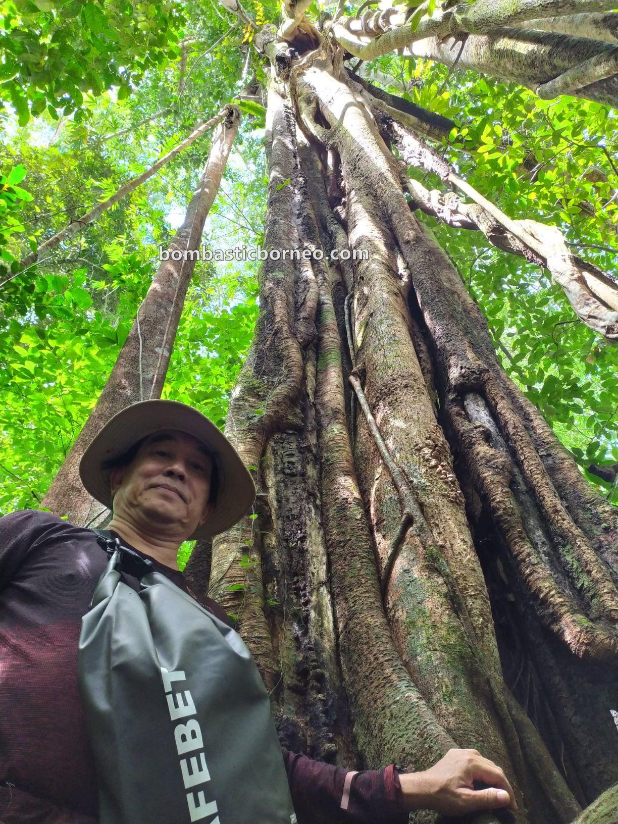 Bung Mawang, Kampung Serumah, Kampung Gayu, rainforest, adventure, nature, outdoor, jungle trekking, hiking, Kuching, Sarawak, Malaysia, tourist attraction, travel guide, Borneo,