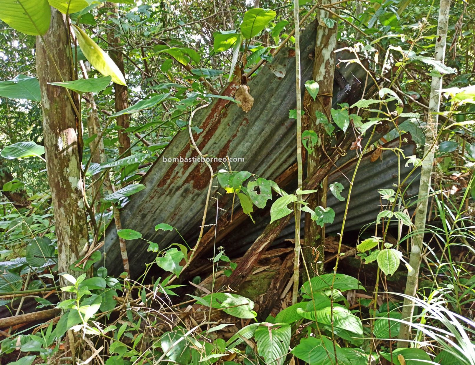 rainforest, outdoor, jungle trekking, hiking, Kuching, Sarawak, Malaysia, Tourism, travel guide, limestone ravine, Borneo, 穿越婆罗洲游踪, 马来西亚砂拉越, 古晋丛林徒步