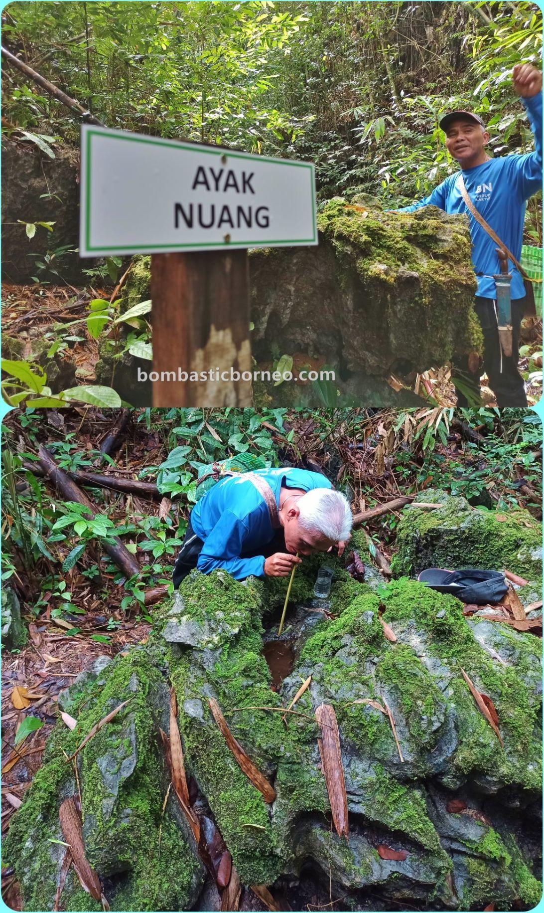 rainforest Kampung Gayu, Serumah village, adventure, nature, outdoor, hiking, exploration, Padawan, Malaysia, tourist attraction, Borneo, 探索婆罗洲砂拉越, 马来西亚自然生态, 古晋丛林徒步