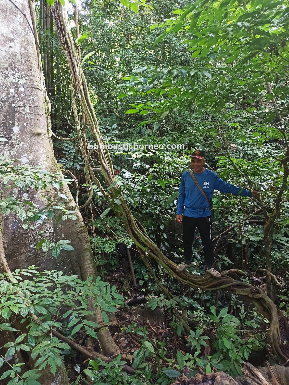 Bung Mawang, Kampung Gayu, Serumah village, adventure, nature, outdoor, hiking, Padawan, Tourism, travel local, Borneo, exploration, 马来西亚古晋, 砂拉越丛林徒步, 婆罗洲热带雨林