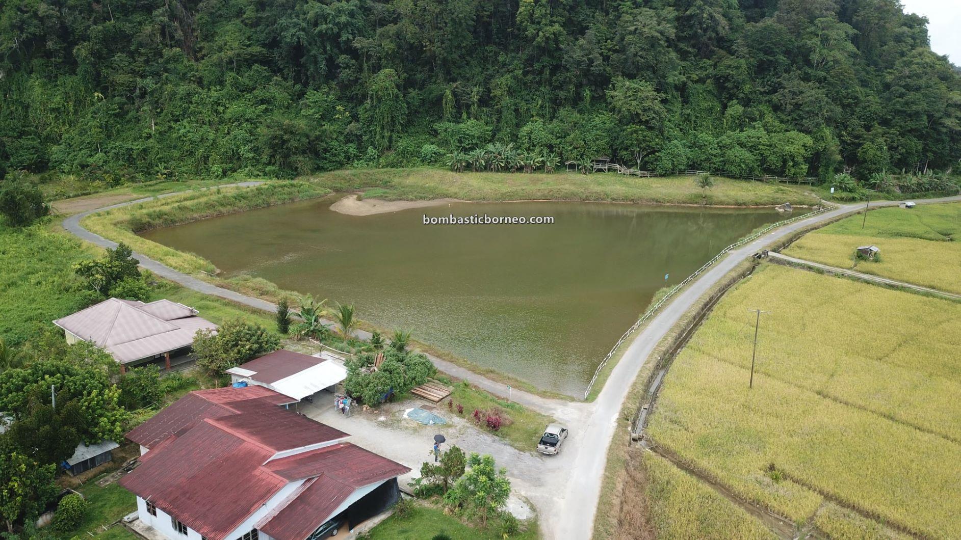 Paddy Field, Sawah Padi, Kampung Chupak, Dayak Bidayuh village, Sarawak, Malaysia, authentic, traditional, destination, nature, Tourism, travel guide, Gua Raya, Cave, Borneo