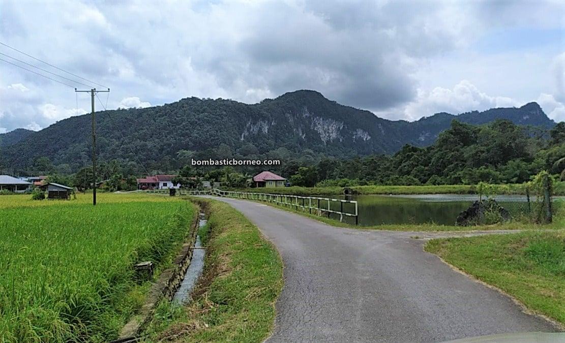 Paddy Field, Sawah Padi, Kampung Chupak, Village, Dayak Bidayuh, Serian, Sarawak, Malaysia, authentic, traditional, destination, ecotourism, tourist attraction, travel local, Borneo