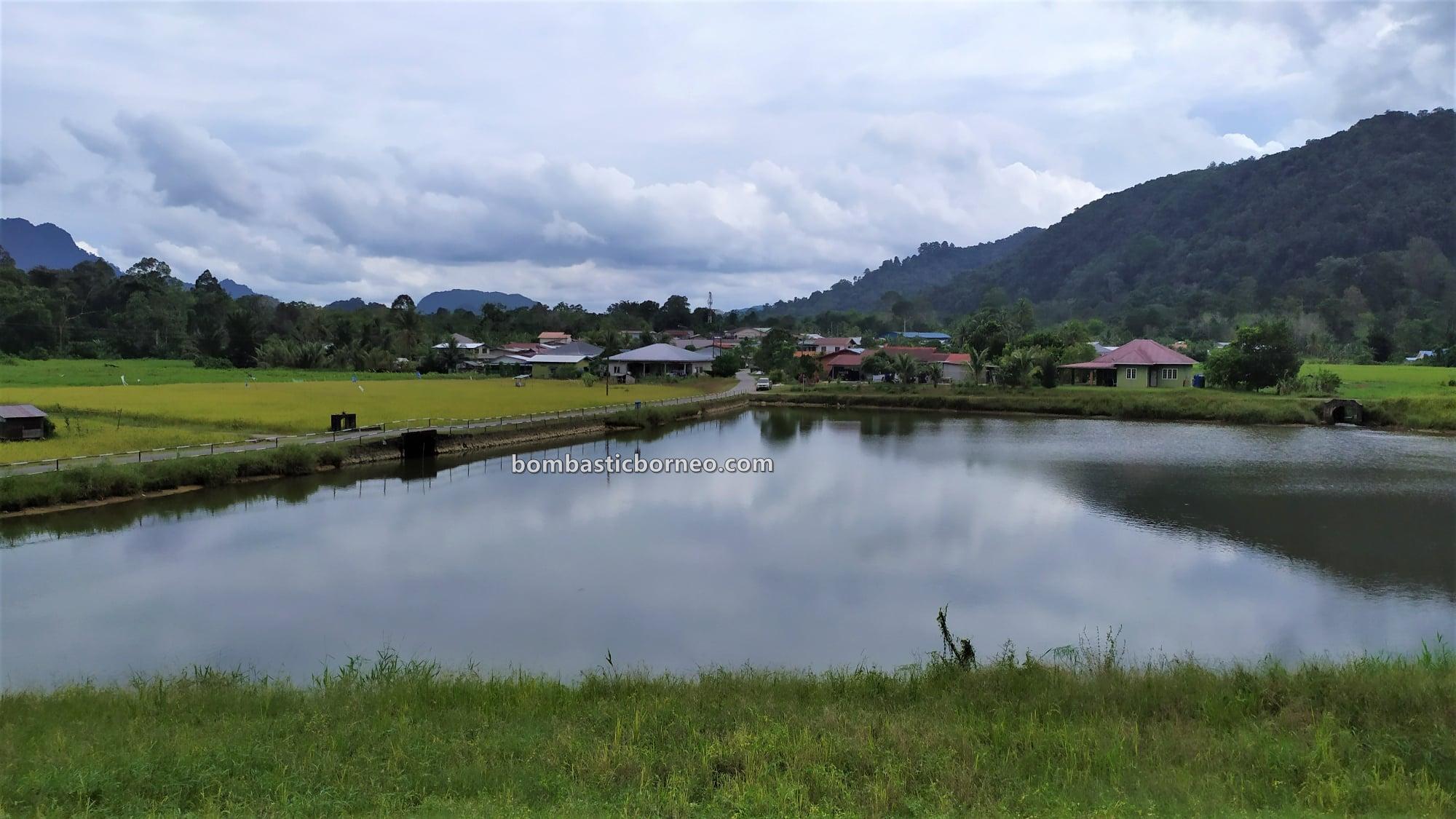 Sawah Padi, Village, Dayak Bidayuh, Siburan, Serian, Malaysia, destination, nature, objek wisata, Tourism, travel guide, Borneo, 穿越婆罗洲游踪, 马来西亚西连, 砂拉越稻米之乡