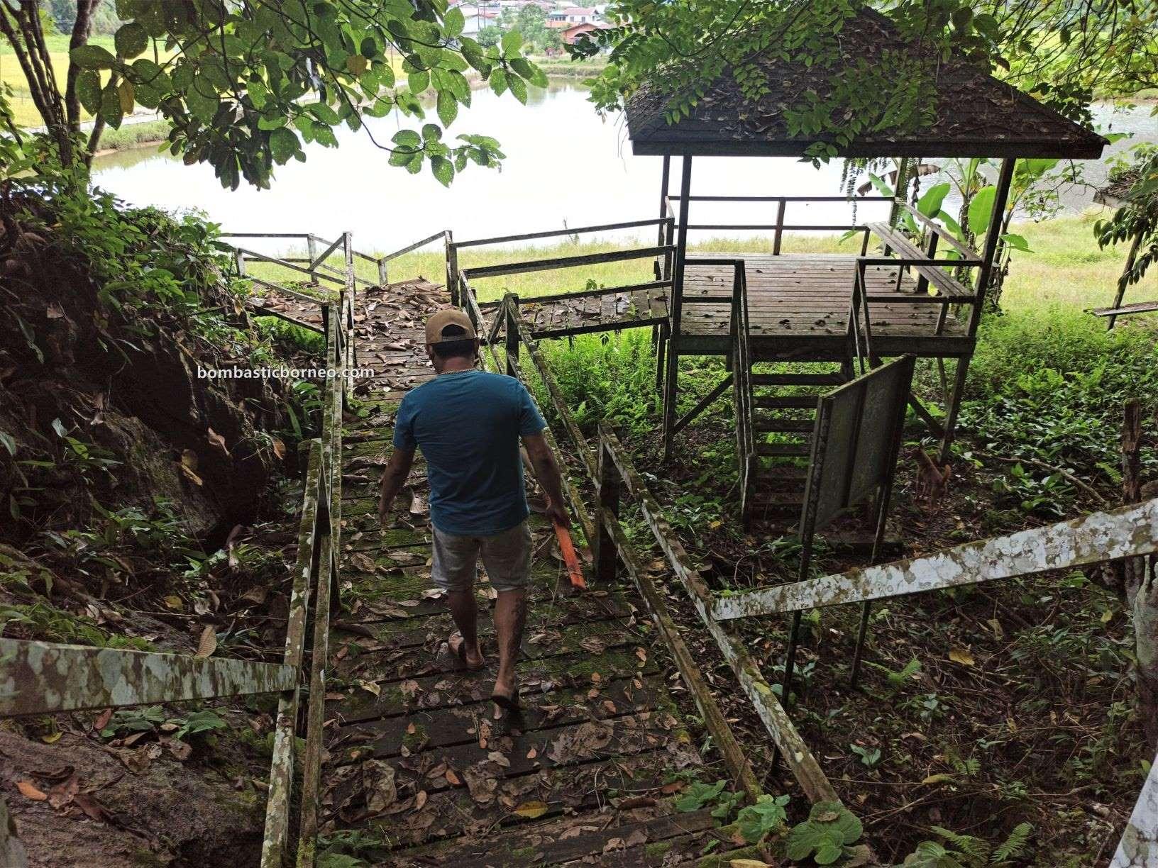 Paddy Field, Sawah Padi, Kampung Chupak, Dayak Bidayuh, Village, backpackers, destination, objek wisata, Tourism, travel guide, Gua Raya, Borneo, 穿越马来西亚砂拉越, 西连稻米之乡, 婆罗洲旅游景点