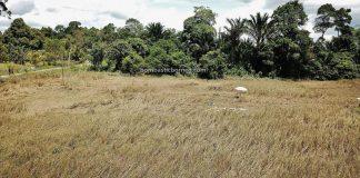 Paddy field, sawah padi, Kampung Slabi, Landau village, dayak bidayuh, destination, Serian, Sarawak, Malaysia, Tourism, tourist attraction, traditional, travel guide, travel local, Borneo