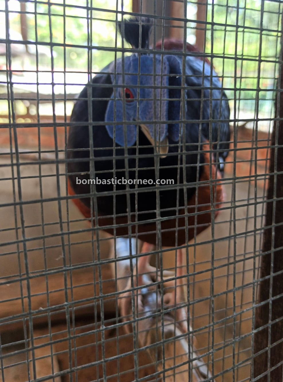 KLB Garden, Agro Park, mini zoo, animal, holiday, nature, exploration, Tebedu, Serian, Sarawak, Malaysia, Tourism, tourist attraction, travel guide, Borneo,