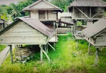Kampung Gahat, Village, hill paddy, padi gunung, dayak bidayuh, native, Tebedu, Malaysia, Tourist attraction, travel guide, travel local, Trans Borneo, 穿越婆罗洲游踪, 马来西亚砂拉越, 西连比达友稻米之乡