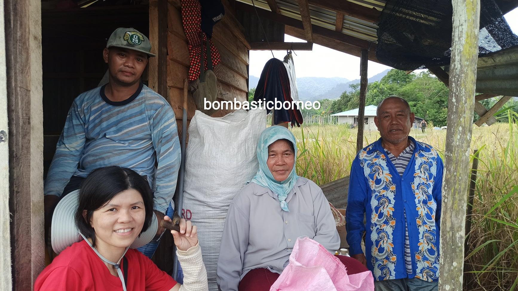 Kampung Bunan Gega, Paddy Farming, Paddy field, Paddy harvesting, Sawah Padi, authentic, traditional, Malaysia, tourism, travel guide, Trans Borneo, 马来西亚砂拉越, 西连比达友农民
