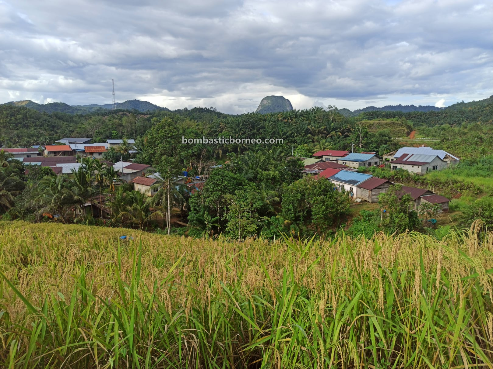 Village, hill paddy, padi gunung, authentic, Traditional, dayak bidayuh, native, exploration, Tourism, tourist attraction, travel local, Trans Borneo, 穿越婆罗洲游踪, 马来西亚砂拉越, 西连稻米之乡