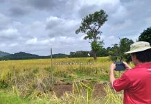 paddy farming, sawah padi, village, Dayak Bidayuh, authentic, traditional, culture, Malaysia, Tourism, tourist attraction, travel local, Borneo, 婆罗洲游踪, 马来西亚砂拉越, 西连稻米之乡
