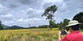 paddy farming, sawah padi, village, Dayak Bidayuh, authentic, traditional, culture, Malaysia, Tourism, tourist attraction, travel local, Borneo, 婆罗洲游踪, 马来西亚砂拉越, 西连稻米之乡