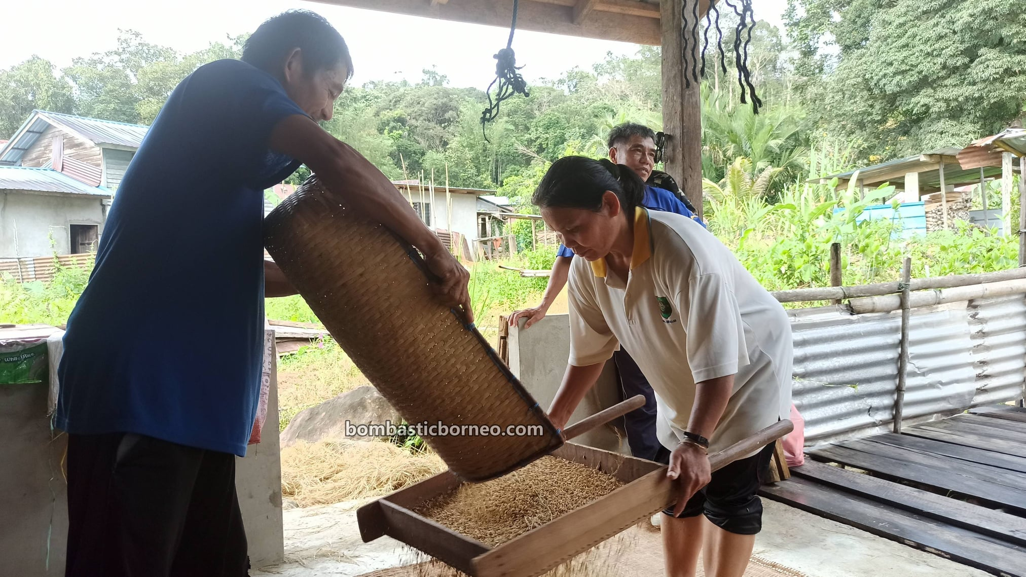 Kampung Gahat, Village, paddy farming, authentic, native, culture, Malaysia, Tourism, tourist attraction, travel guide, travel local, Trans Borneo, 探索婆罗洲游踪, 马来西亚砂拉越, 西连比达友村