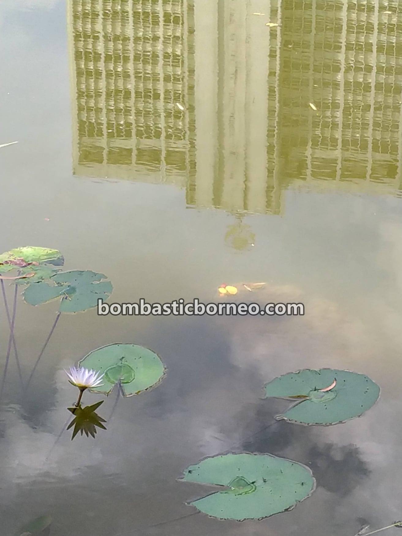 Taman Botani Sarawak, Sarawak Botanical Garden, recreational park, tempat senaman, exercise, jogging, walking, nature, Borneo, manmade lake, objek wisata, Tourism, 马来西亚砂拉越, 古晋植物园, 运动旅游景点